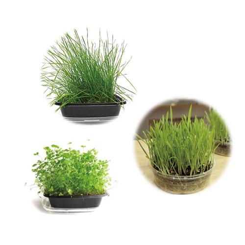 生牧草栽培 3種類セット