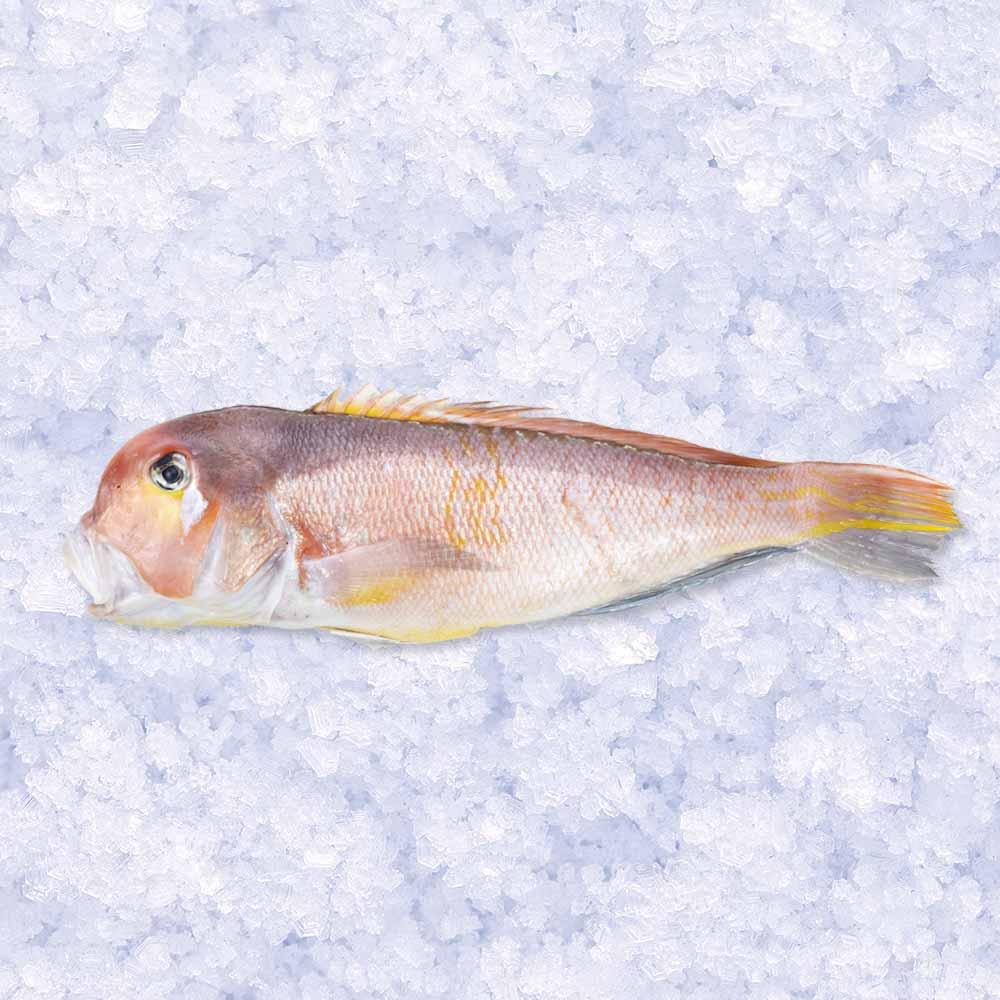 最高級 甘鯛(アマダイ) 1尾 超特大 約1kg【牛深漁港直送】