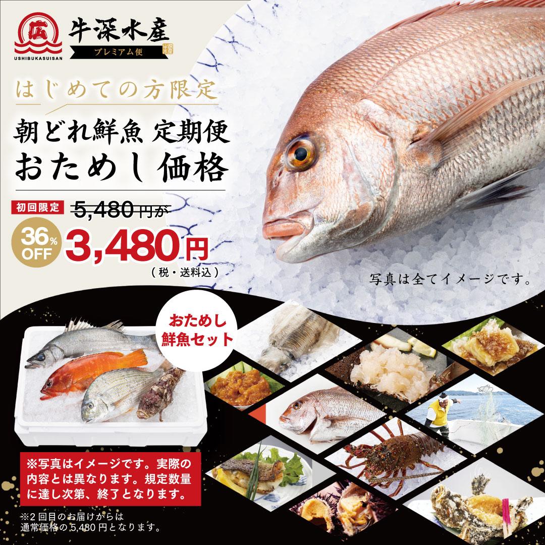 [定期購入商品] 朝どれ鮮魚 定期便 牛深漁港直送