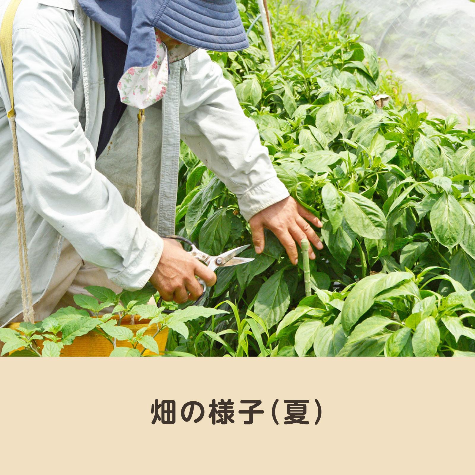 <茨城県>岩城農園の旬のおまかせ野菜セット