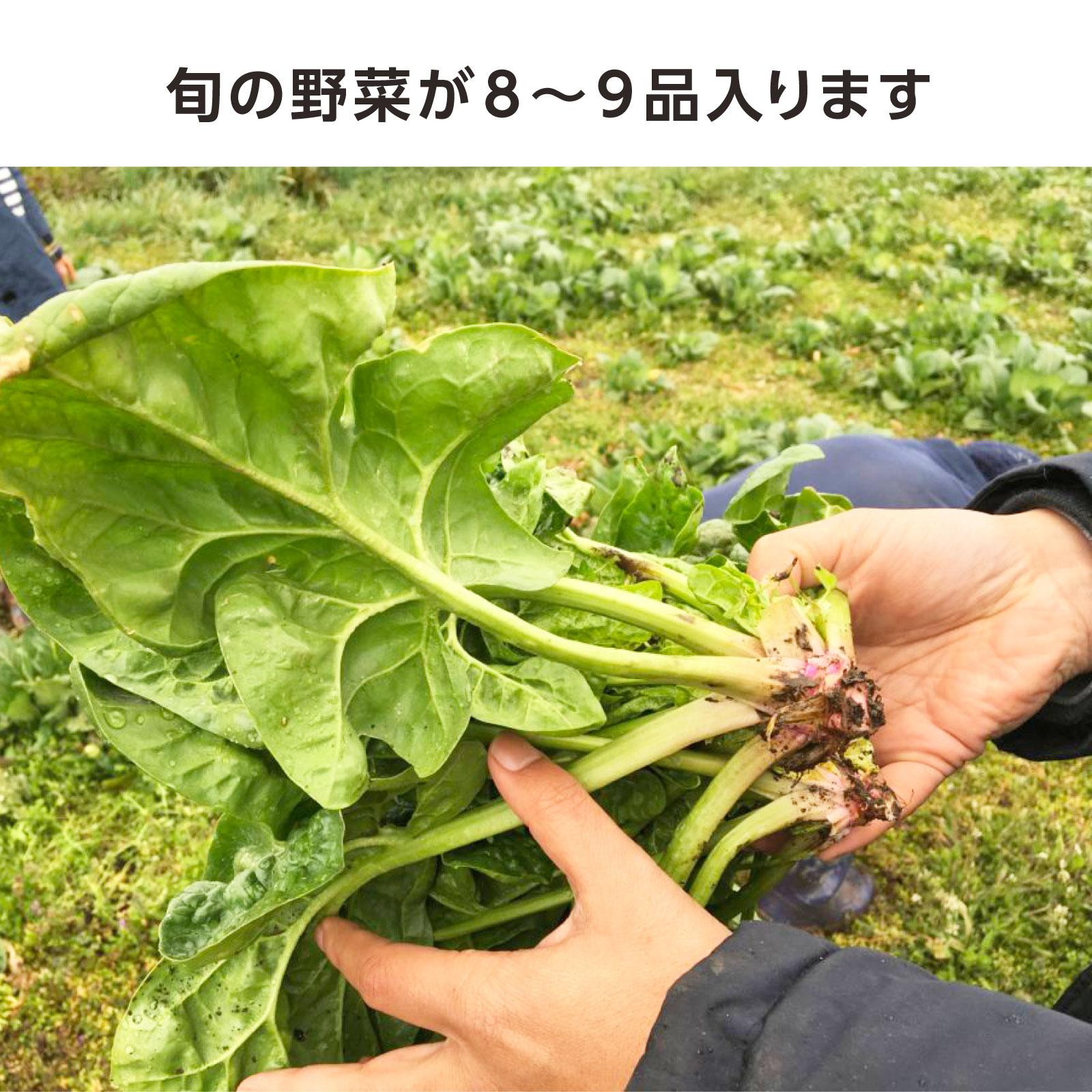 <千葉県山武市>斎藤かんいちさんのおまかせ季節の野菜セット