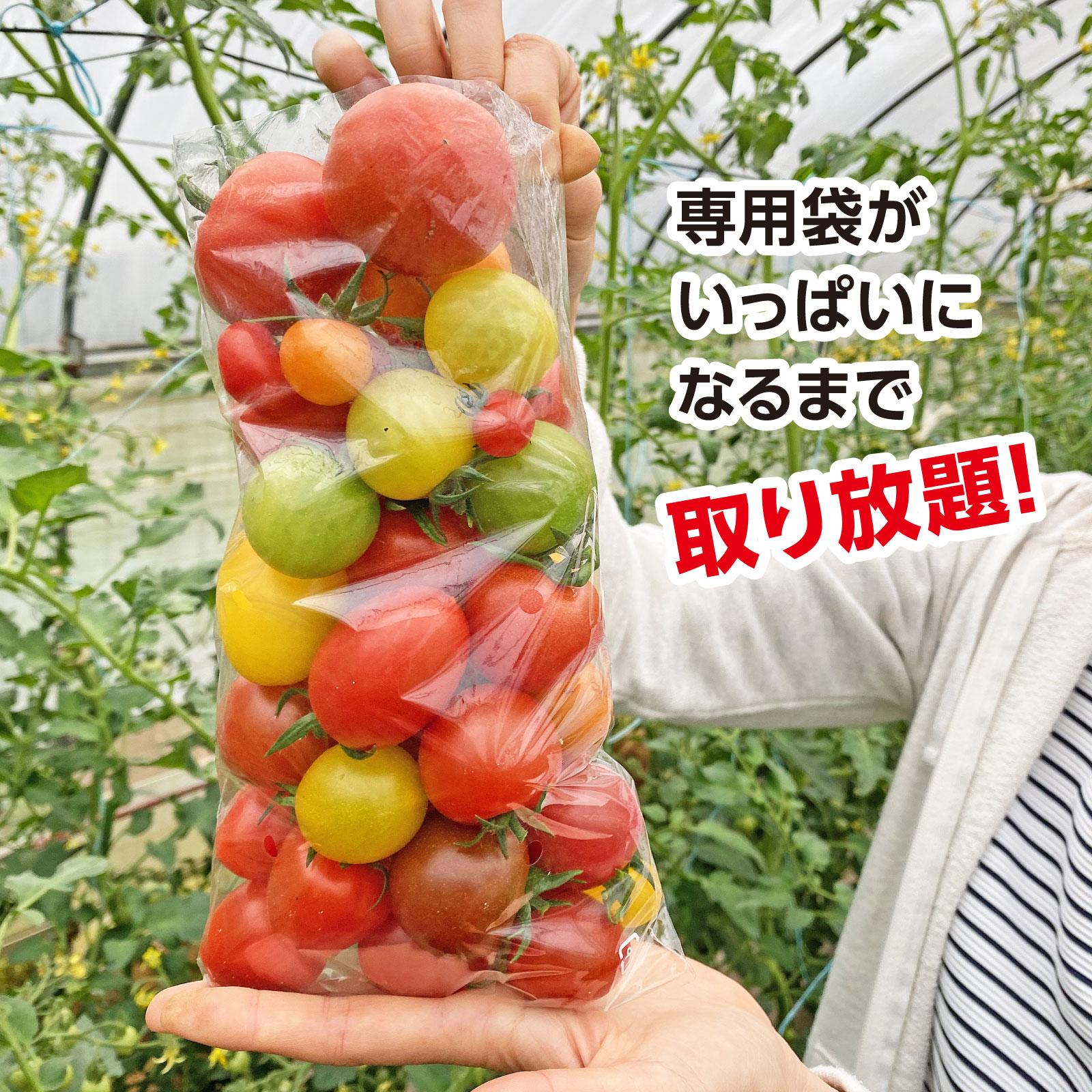 """リンドトマコファーム""""セロリ収穫体験/トマト狩り"""""""