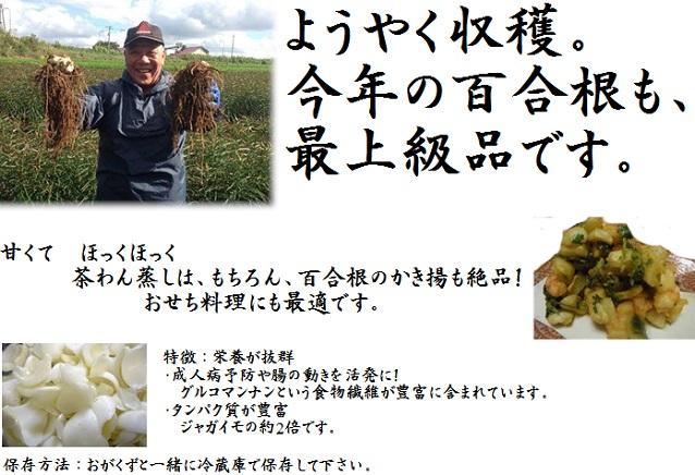【送料無料】契約農家 ゆり根  2キロ入 真狩産  (関西エリアまで送料無料)