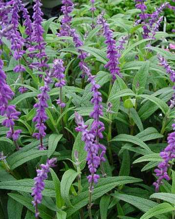 【リセットオイル】野生植物100%オイル、食品規格、天然オイルでシミ、くすみの対策に![20ml]