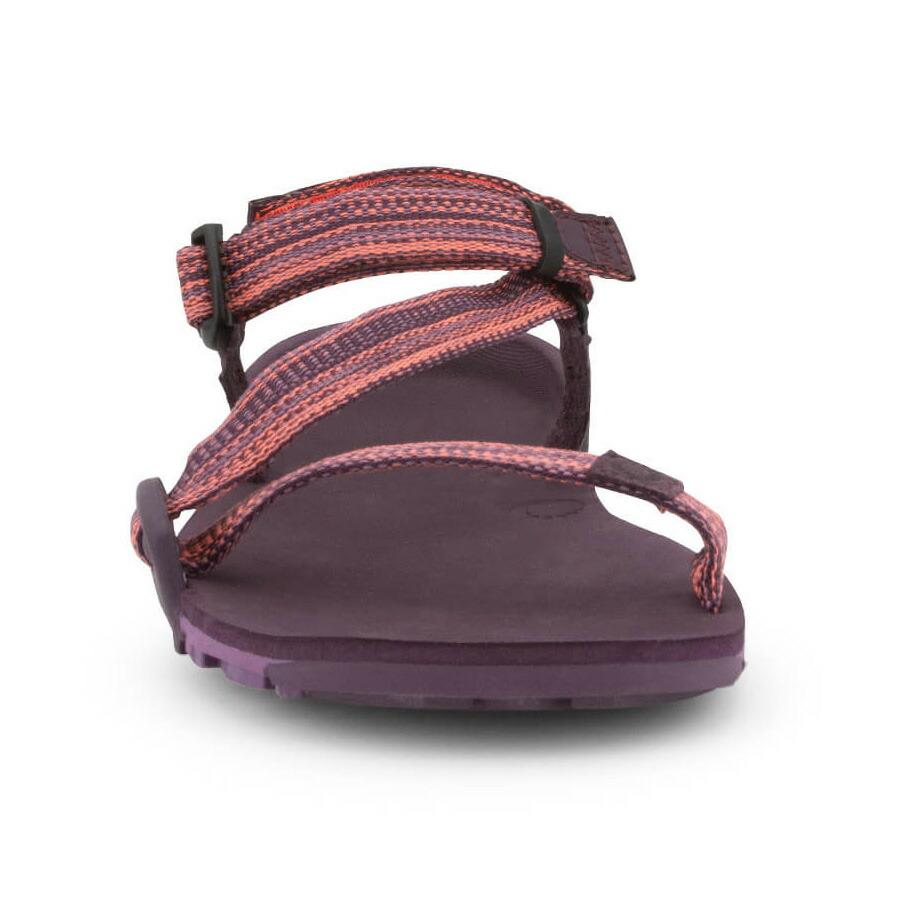 Xero Shoes ゼロシューズ ZトレイルEV W's マゼンタ