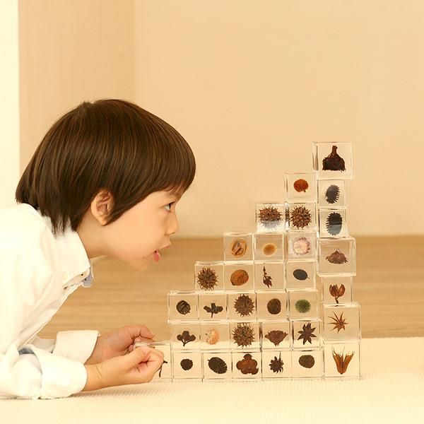 カラマツ Sola cube 宙 ソラキューブ ウサギノネドコ おしゃれ インテリア 立体標本 透明 植物 小物 クリア プレゼント 女性 男性 ラッピング ギフト 箱