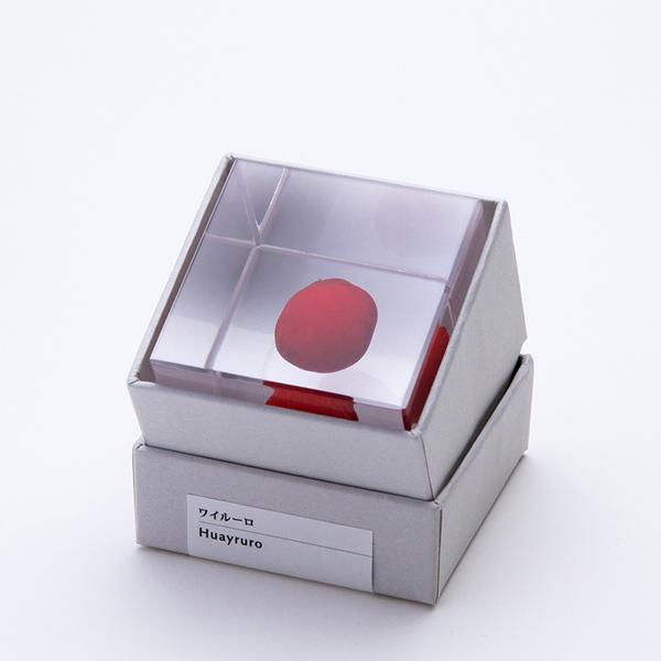 ワイルーロ Sola cube 宙 ソラキューブ ウサギノネドコ おしゃれ インテリア 立体標本 透明 植物 小物 クリア プレゼント 女性 男性 ラッピング ギフト 箱