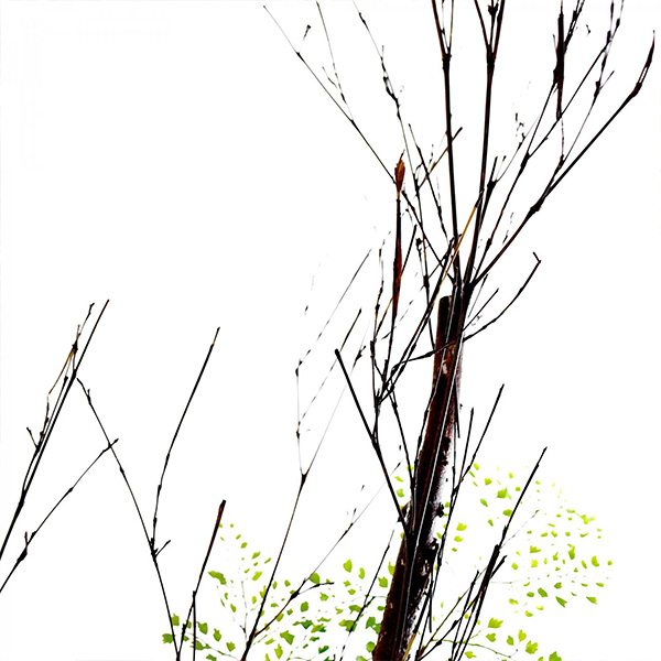フェイクグリーン 大型 白樺 アジアンタム ガラスシリンダー 造花 人口 観葉植物 フロアグリーン グリーンパーク H160cm GREENPARK PRGR-1233 人気 シンプル