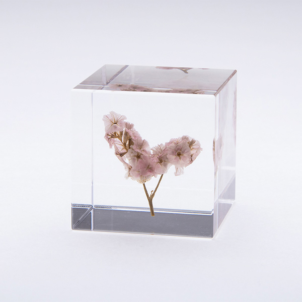 サマーチェリー Sola cube 宙 ソラキューブ ウサギノネドコ おしゃれ インテリア 立体標本 透明 植物 春 小物 クリア プレゼント 女性 男性 ラッピング ギフト