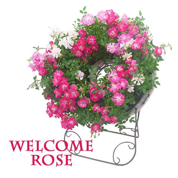 母の日 早割 送料無料 花 ギフト プレゼント ウェルカム ローズ スタンド 付き 薔薇 バラ レンゲ ローズ 寄せ植え ミニバラ フラワー ピンク ホワイト かわいい