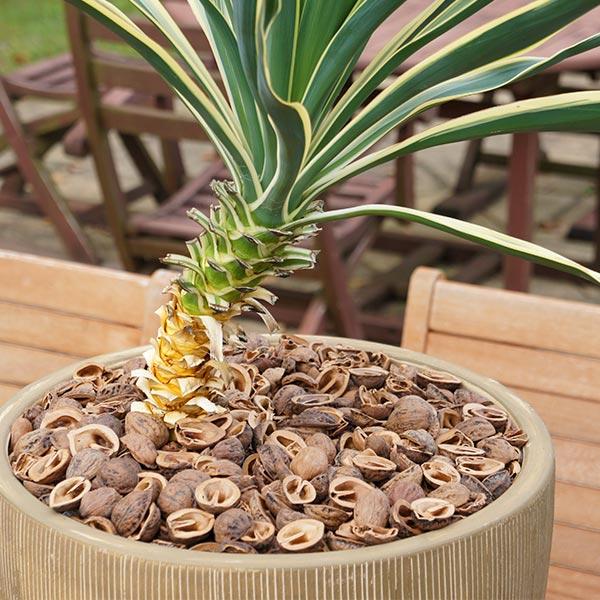 クルミの殻 14kg 約45リットル マルチング 雑草防止 乾燥防止 保温 天然素材 ナチュラル 装飾 ガーデニング 園芸資材 くるみ 胡桃 おしゃれ