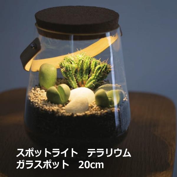 テラリウム ケース ガラス ポット スポットライト ハンドル付 20cm 苔 多肉 瓶 電気 コケリウム 容器 観葉植物 コケ 多肉植物 寄せ植え シンプル ナチュラル
