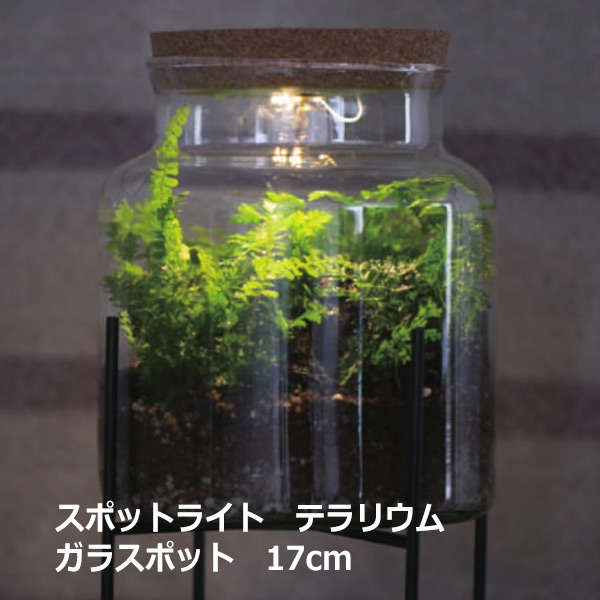 テラリウム ケース ガラス ポット スポットライト 17cm 苔 多肉 瓶 電気 コケリウム ガラス 容器 観葉植物 コケ 多肉植物 寄せ植え シンプル ナチュラル