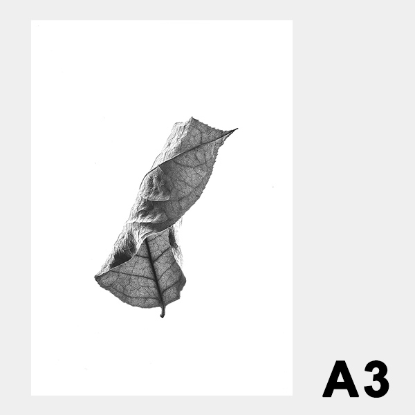 ペーパーコレクティブ Floating Leaves 01 A3 クリア ポスター Paper Collective 08115 透明 透過プリント 葉 北欧 インテリア おしゃれ