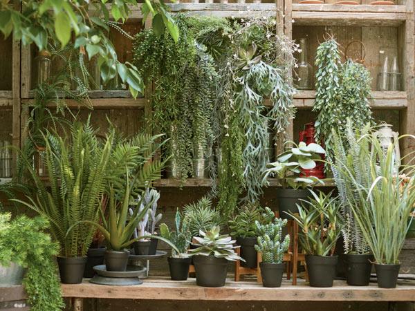 フェイクグリーン 多肉植物 ホヤ ポット 鉢 おしゃれ リアル 観葉植物 造花 インテリア Brown 大きい 春 新生活