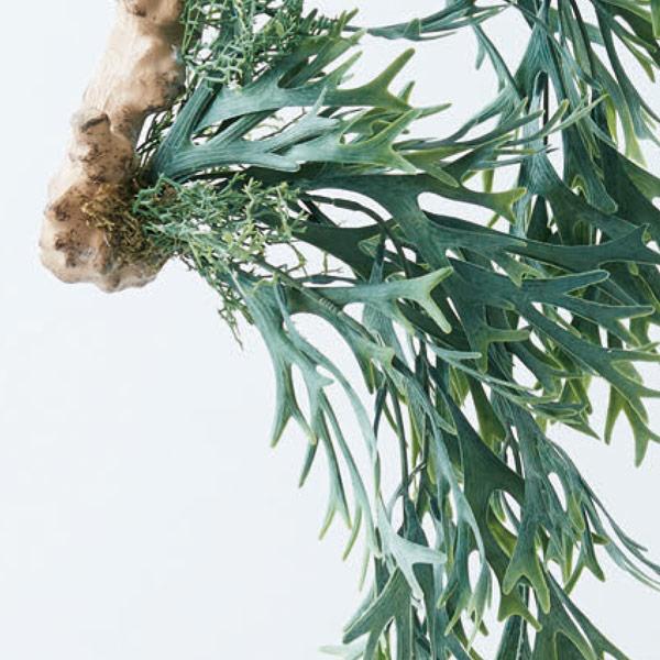 フェイクグリーン ビカクシダ着生ブルー ハンギング おしゃれ グリーン インテリア 吊り下げ 壁掛け 壁 リビング ディスプレイ オブジェ 観葉植物 植物  Brown