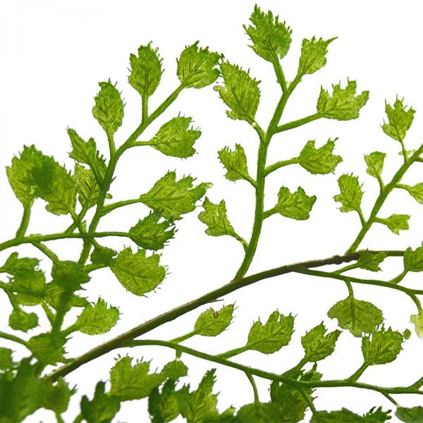 フェイクグリーン アジアンタム フェイクウォーター H55cm 卓上 造花 観葉植物 テーブルグリーン インテリア おしゃれ PRGR-1105 人気 アレンジメント 植物