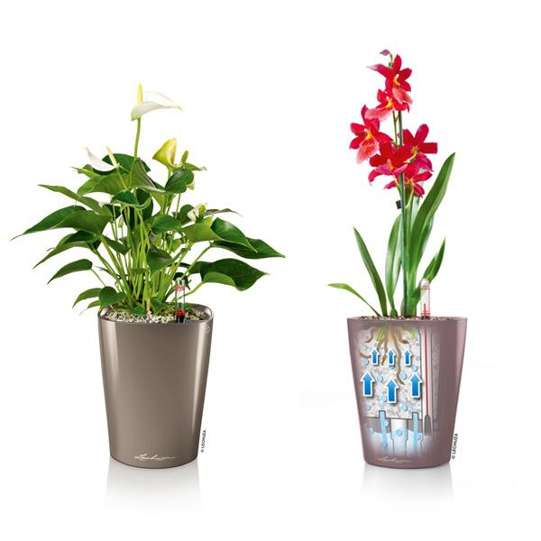 デザイン プランター 0.5L 自動 吸水 底面 灌水 植木鉢 カラー プラスチック レッド ベージュ ホワイト パープル デルティーニ おしゃれ レチューザ プレミアム