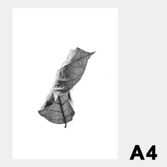 ペーパーコレクティブ Floating Leaves 01 A4 クリア ポスター メール便 対応 Paper Collective 8114 透明 葉 北欧 インテリア おしゃれ