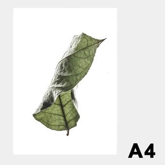 ペーパーコレクティブ Floating Leaves 04 A4 クリア ポスター メール便 対応 Paper Collective 8123 透明 葉 北欧 インテリア おしゃれ