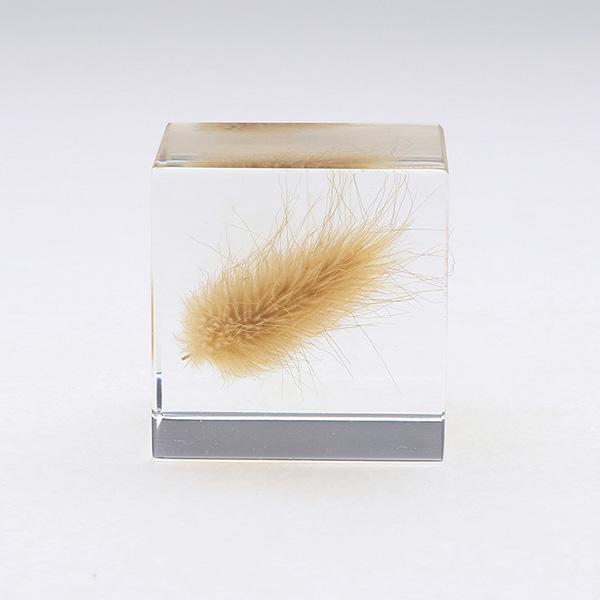 ウサギノオ Sola cube 宙 ソラキューブ ウサギノネドコ おしゃれ インテリア 立体標本 透明 植物 小物 クリア プレゼント 女性 男性 ラッピング ギフト 箱
