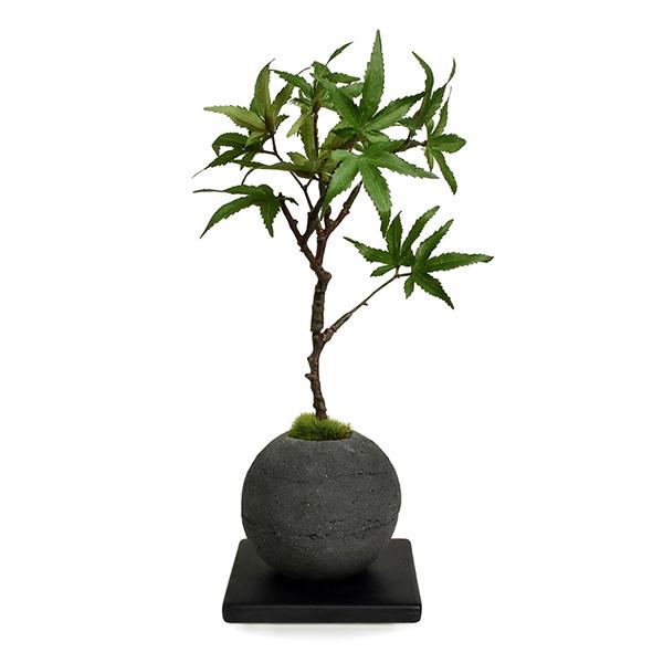 盆栽 モミジ 檜 炭 ボール 黒皿 CUPBON フェイクグリーン 造花 ミニ サイズ PRGR-1103 消臭 調湿 効果 ヒノキ 脱臭 和 モダン 炭ボール 和室 丸い 檜炭