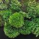 盆栽 マリモ シノブ フェイクグリーン 壁掛け 人工 観葉植物 造花 スタンド付 CUPBON シダ植物 ウォールデコM 盆栽 PRGR-1202 フレーム アレンジメント モダン