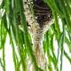 造花 ハンギング フェイクグリーン リプサリス マクラメ 人口 観葉植物 吊り下げ グリーン おしゃれ ナチュラル オリーブ PRGR-0819 PRGR-1184 GREENPARK 人気