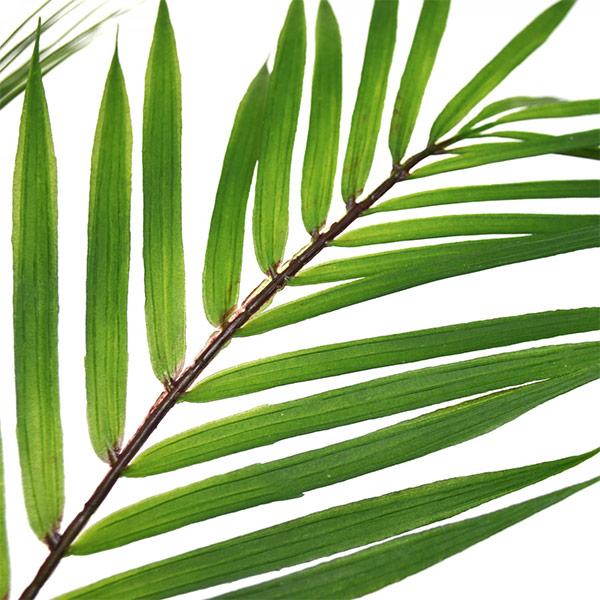 フェイクグリーン パームリーフ 皿付 プランター 卓上 造花 人口 観葉植物 テーブルグリーン H80cm PRGR-1036 グリーンパーク GREENPARK 陶器 葉 人気 シンプル