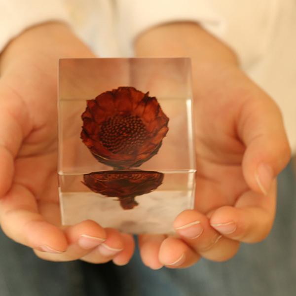 タンポポ 5cm Sola cube 宙 ソラキューブ ウサギノネドコ 立体標本 透明 植物 おしゃれ インテリア 小物 クリア プレゼント ギフト 箱 春