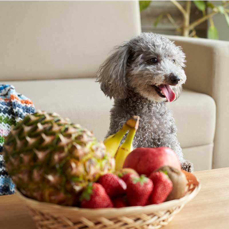 【定期購入】わんのはな FRESH DRYフルーツ パイナップル