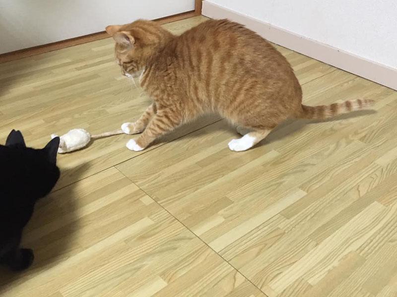 APPYDOG オーガニックコットン猫用おもちゃ(ぬいぐるみ) またたび入りネズミ(小)