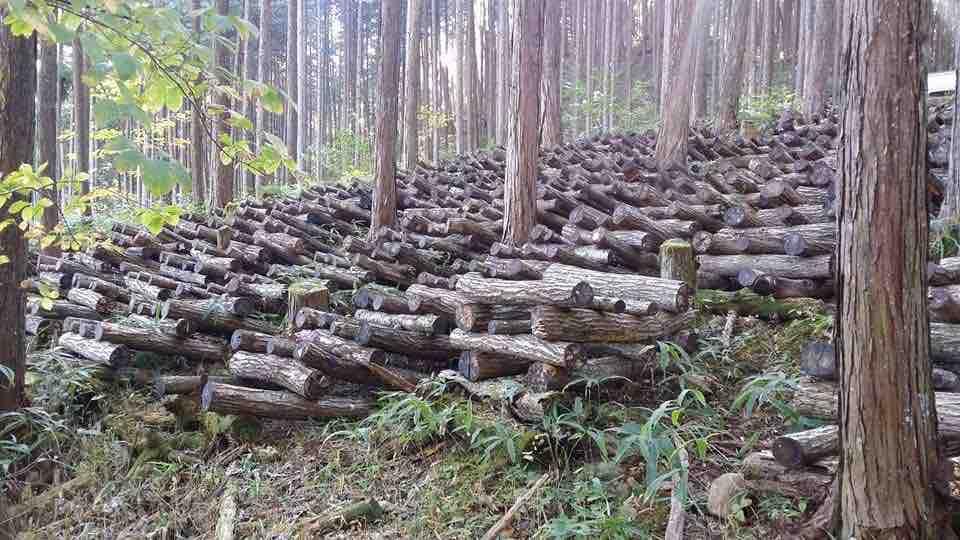 黒川特産 原木自然栽培 乾椎茸(徳用)100g