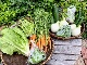 白川町・無農薬野菜ボックス【毎週木曜日発送】