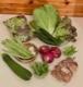 【12/3 発送便】白川町・無農薬野菜ボックス【木曜日発送】