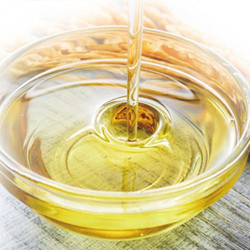 一番搾り綿実油 単品