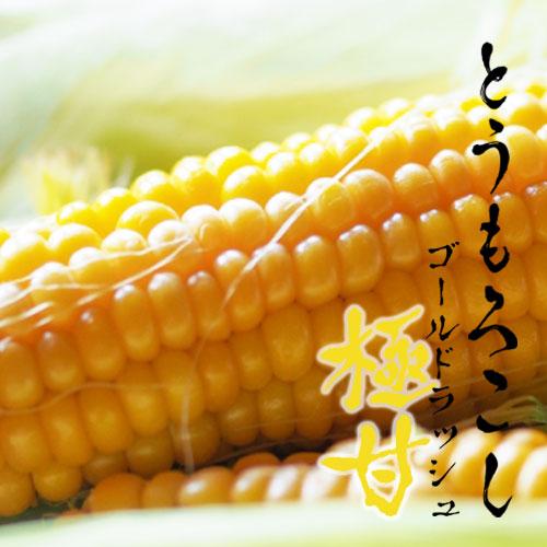 -完売御礼-【夏収穫】極甘、ゴールドラッシュ2kg箱(5〜6本入)※最終販売〆切7/10