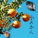自宅で果樹園!【フルーツの木】季節の6回コース ※送料込