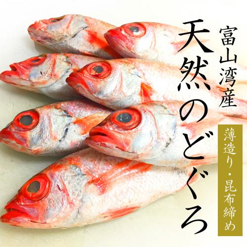 【富山湾産】天然のどぐろ「薄造り・昆布締め」贅沢セット