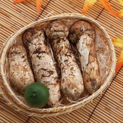 【季節限定】鮮度が自慢。国産松茸 竹籠入り【梅】(10/13注文〆予定)