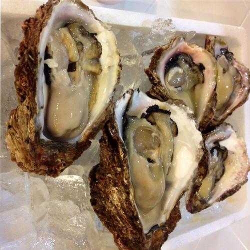 【極上ブランド「夏輝」】漁師が素潜りで獲った天然岩牡蠣!帯付5個セット