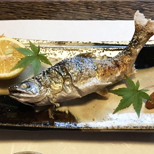 【旬の季節限定】喜連川育ち、とれたて旬の鮎!『生鮎』(さくら鮎1kg)※冷蔵