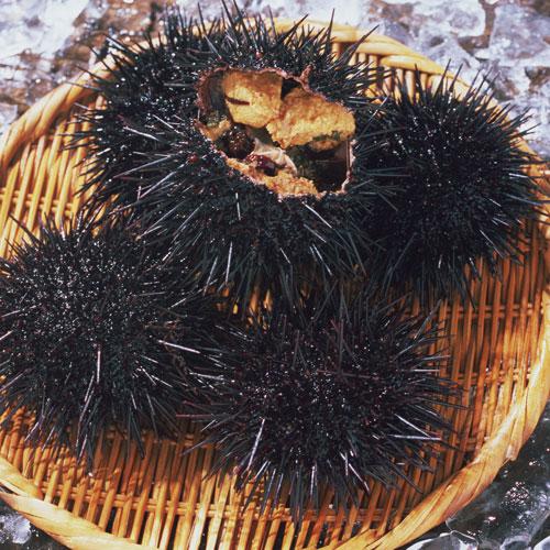 【季節限定】津軽海峡の生うに ※漁期6月〜7月分(最終7/20〆切)