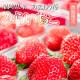【送料無料】あまおう苺 「みらいちご」ギフト箱 9〜15粒<1/16〜1/31出荷分>