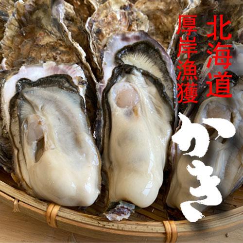 北海道厚岸で漁獲、殻付き牡蠣 【Lサイズ20個】★カキナイフ付き