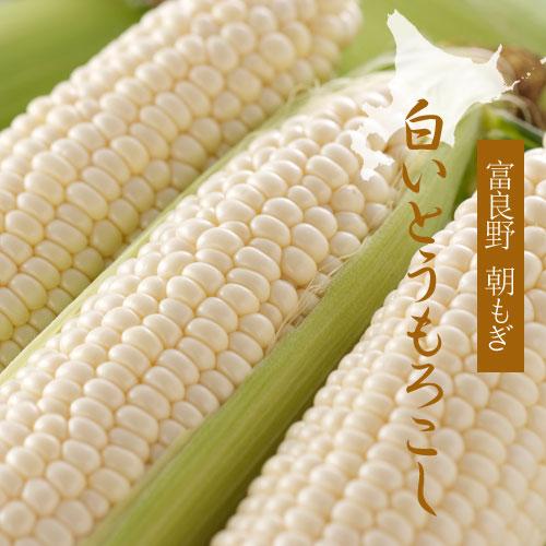 【夏収穫】富良野 朝もぎ、白いとうもろこし 2Lサイズ(8本)※最終販売〆切8/30