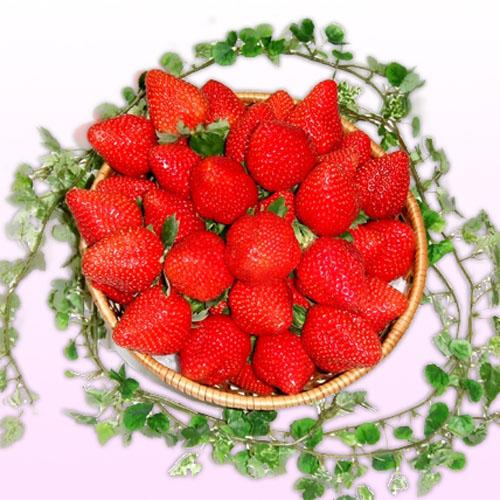 【岡山県産】真っ赤な大粒いちごビックリバスケット