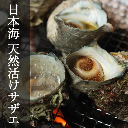 【鳥取網代港直送】日本海 天然活けサザエ 2kg