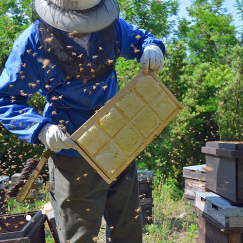 自然のままの純粋なハチミツ「極巣みつ」(国産はちみつ)