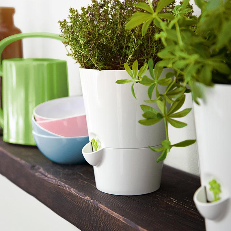 室内用ハーブポット Herb Pots